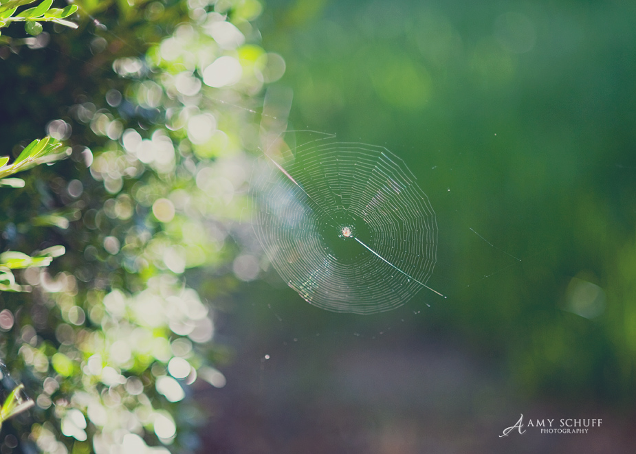 spiderweb_blog