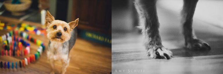 AmySchuff-SacramentoFamilyPhotographer_0054-1.jpg